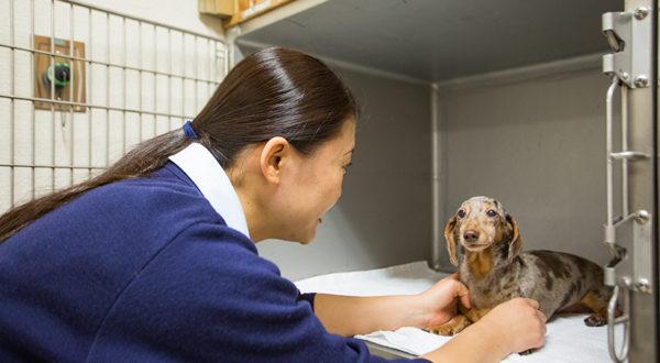 動物の病気と予防